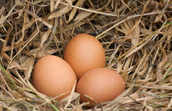 Egg. Still life eggs. Eggs, three eggs in the nest of dry grass Royalty Free Stock Photography
