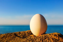 Egg and stone Royalty Free Stock Photo