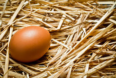 Egg on the straw Stock Images