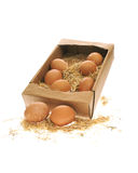 Egg with straw Stock Photo