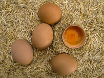 Egg with straw Stock Image