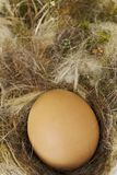 Egg on straw Royalty Free Stock Images