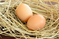Egg on straw Royalty Free Stock Photos