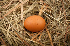 Egg in straw nest Stock Photography