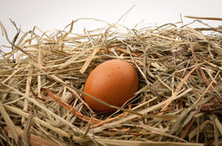 Egg in straw nest. Fresh chicken egg in straw nest stock photography