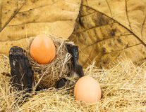 Egg on straw Stock Images