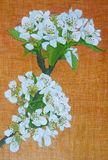 Egg tempera painting of pear blossom Stock Photography