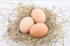 Egg. Three egg laid on the hay Stock Image