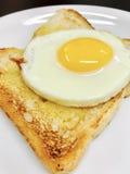 Egg on toast Royalty Free Stock Photos