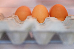 Egg. In the  tray Stock Image