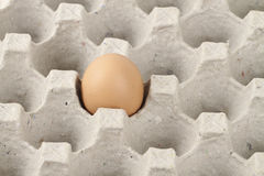 Egg in a a tray Stock Images