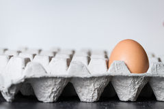 Egg in tray Stock Image