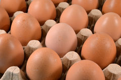 Egg carton with eggs. Stock Photo