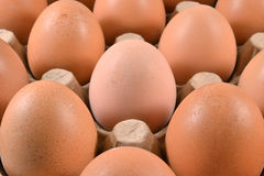 Egg carton with eggs. Stock Image