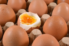 Egg carton with eggs. Royalty Free Stock Image