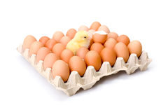 Egg tray with newborn yellow chicken in center Stock Image
