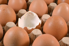 Egg carton with eggs. Stock Images