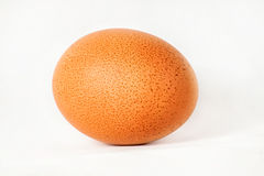Egg. On a white background royalty free stock image