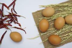 Egg on white background stock photo