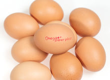 Egg white background Stock Photos