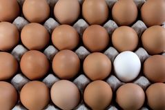 An egg white into brown eggs, Visible minority. An egg white into brown eggs, representing visible minority Royalty Free Stock Image