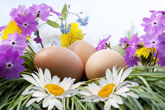 Egg and white camomile Royalty Free Stock Photos