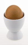 Egg in white egg cup,  on white. Egg in white egg cup Stock Images