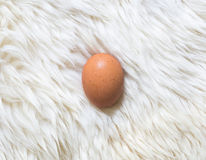Egg on white fur carpet. This egg is in fur carpet so it need carefully protection Stock Photo
