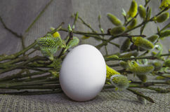 Egg, willow, pussy-willow, branch, fluffy, white, bud Stock Images