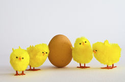 Egg With Chicks Royalty Free Stock Images