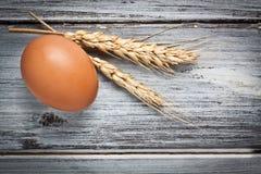 Egg With Ear Stock Photos