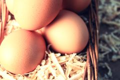 Free Egg With Wood Chips. Stock Photos - 49378813