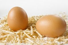 Egg in wood chips over white Royalty Free Stock Images