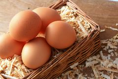 Egg with wood chips. Stock Images