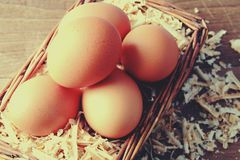 Egg with wood chips. Royalty Free Stock Images