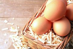 Egg with wood chips. Stock Photo