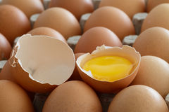 Egg Yolk Stock Photography