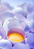 Egg yolk in blue Royalty Free Stock Photos