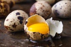 Egg yolk in brocken quail eggs on rustic table. Egg yolk in broken quail eggs on rustic table Stock Photos