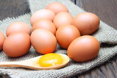 Egg yolk with chicken eggs Stock Image