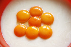 Egg yolk closeup as a background. Raw eggs in a bowl. Raw eggs. Yellow yolk as food ingredients Royalty Free Stock Image