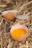 Egg yolk in an eggshell Stock Photo