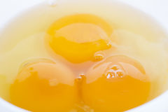 Egg yolk. In white bowl on table, closeup royalty free stock image