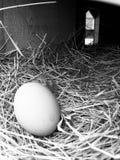 Eggactly! Стоковые Изображения