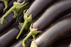 Eggplant. There are eggplants in the Royalty Free Stock Photo