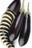 Eggplant. Stock Photo