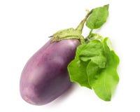 Eggplant Royalty Free Stock Photography