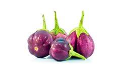 Eggplant. Stock Photos