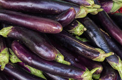 eggplant Fotografia de Stock