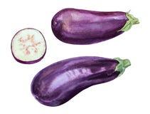 eggplant ilustração royalty free